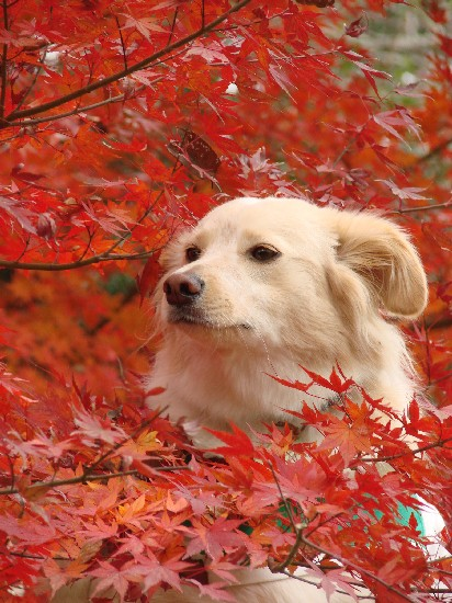 2009_1212_komugi_9.jpg