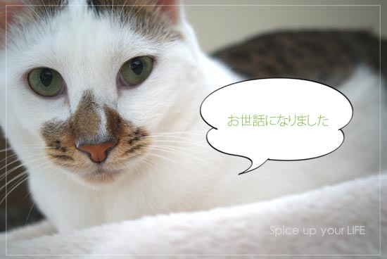 fc2_198_2.jpg