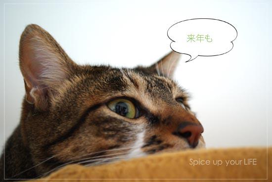 fc2_198_3.jpg
