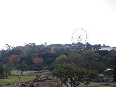 伊豆バイオパーク20091123