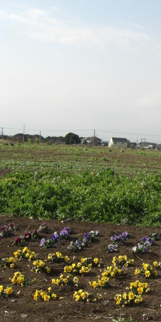 横須賀ソレイユの丘20080126