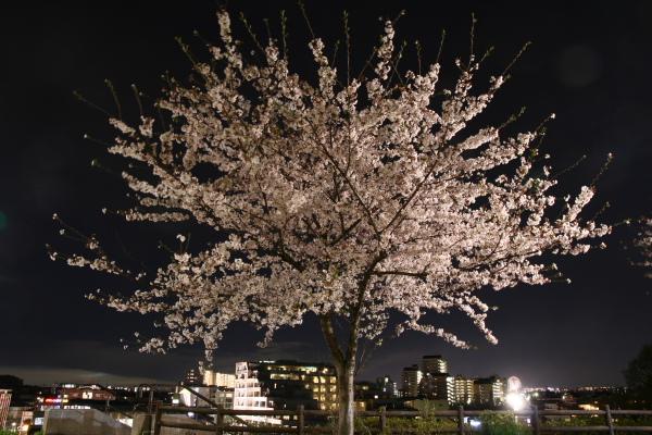 20100410横浜国際プール1