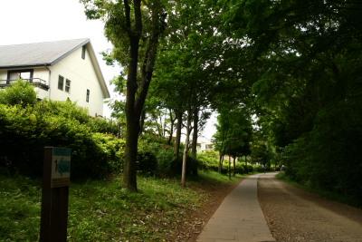 20100515都筑緑道7
