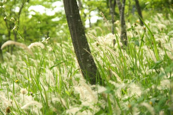 20100613都筑中央公園2