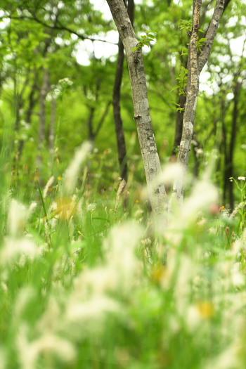20100613都筑中央公園1