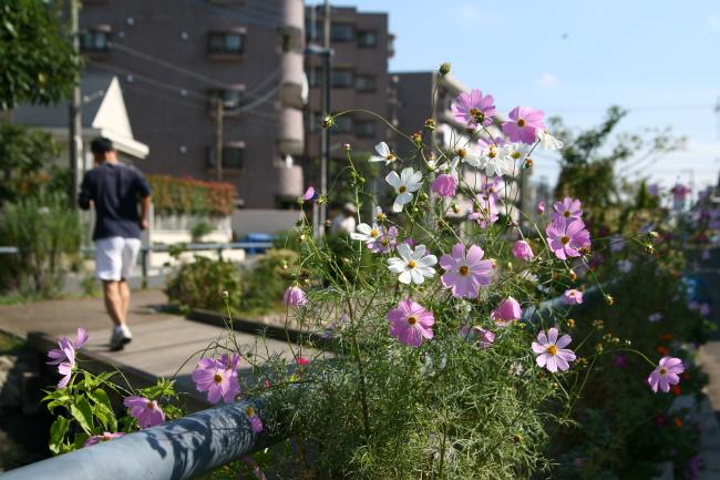 20101023江川せせらぎ遊歩道
