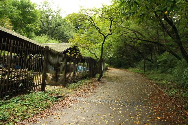 20101031都筑中央公園3