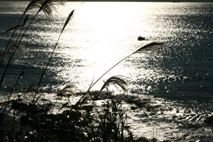 20101103野比海岸5