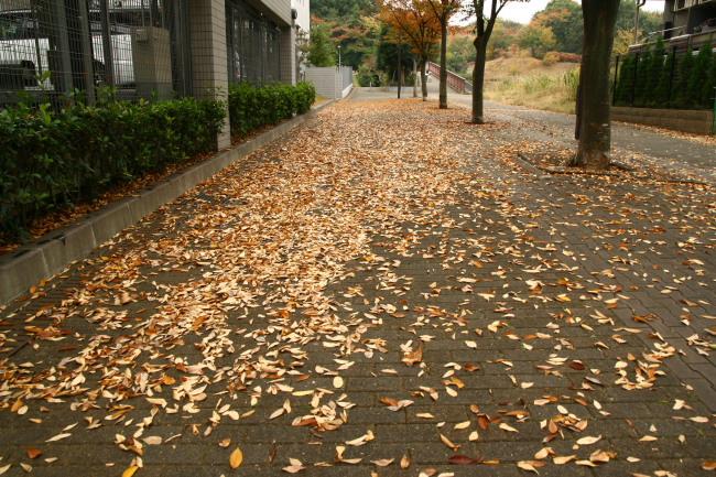20101114せきれいの道