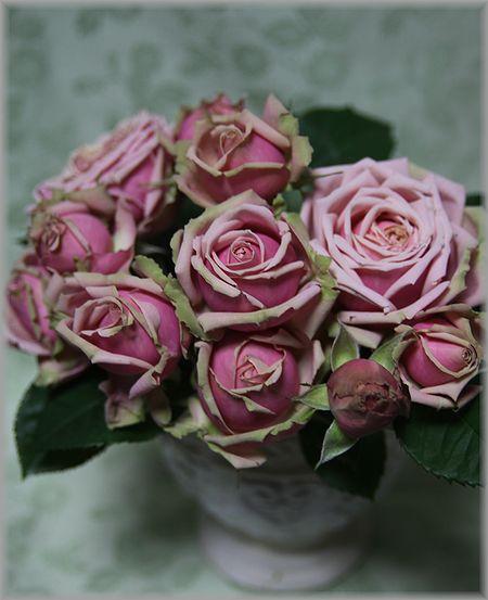 2011.4.13薔薇2