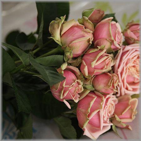 2011.4.13薔薇