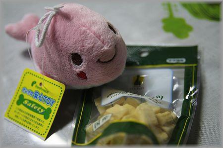 2011.9.4 お土産