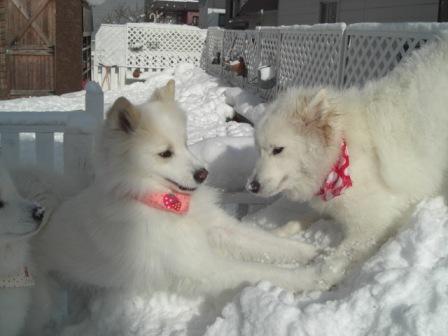 雪山を掘るマリア.jpg