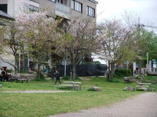 Cherry_Blossoms_in_2010_E_01_2010-04-15