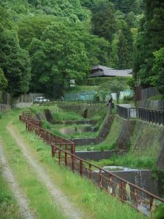音羽川(後安堂橋付近)(6)_2010-05-13