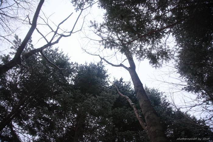 山北沢の滝1 (4)