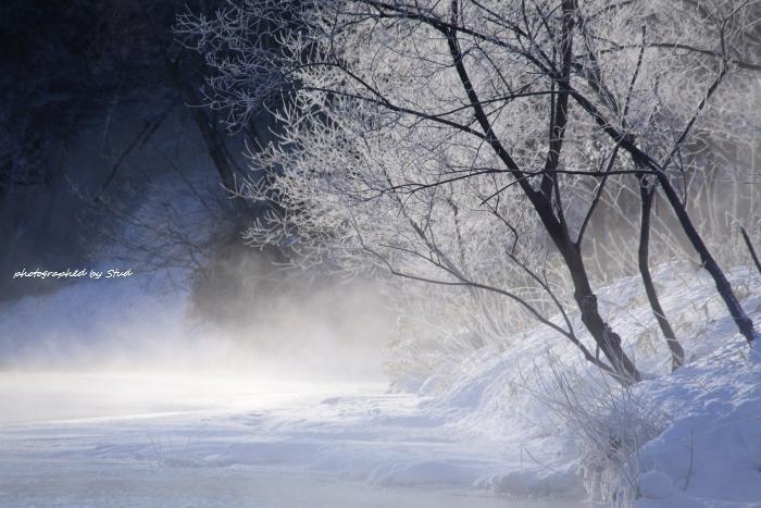 ウヨロ川 霧氷1 (1)