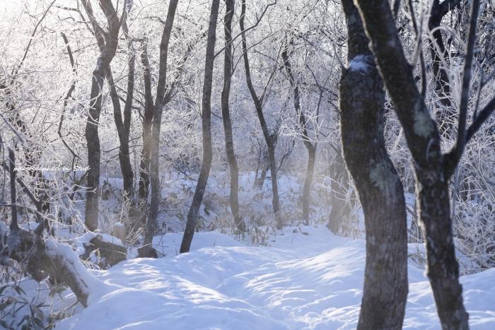 ウヨロ川 霧氷1 (2)