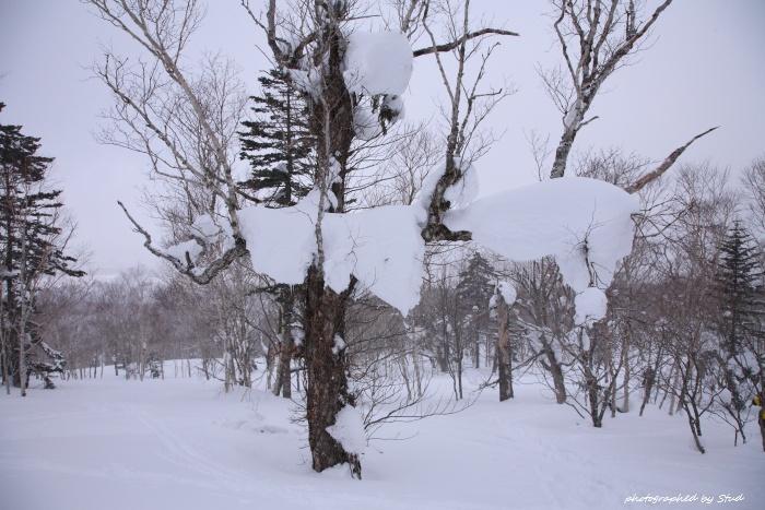shiraoidake-2012 (19)