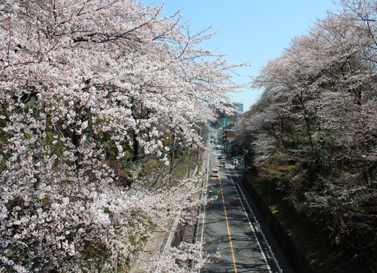 0408sakura.jpg