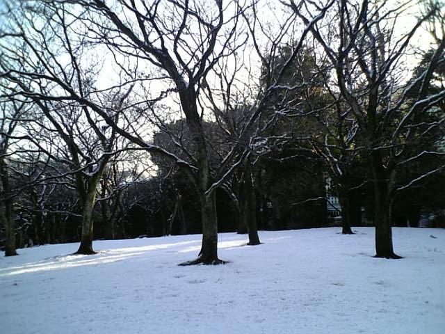雪がつもったよ