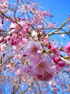 可愛い花びら