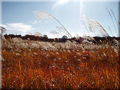 PA1022ススキノ原の風