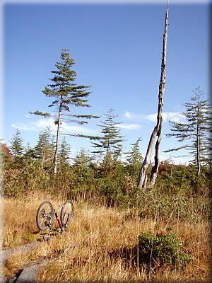 PA1022この木何の木?