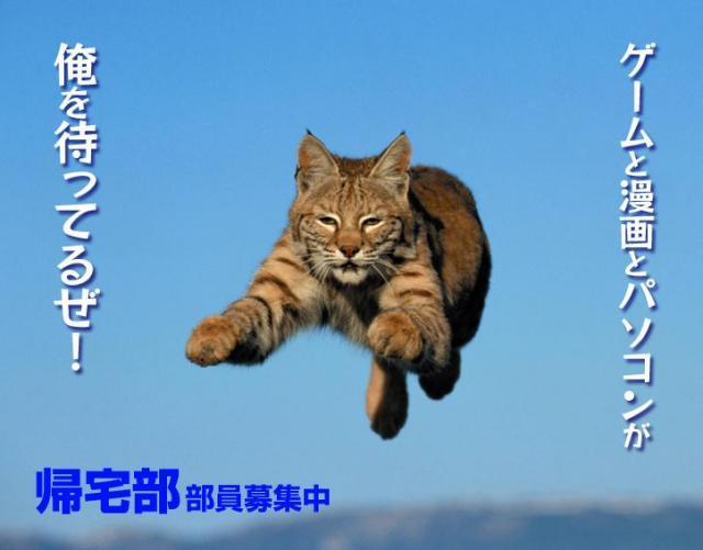 vlomoshiro003368.jpg