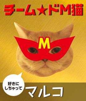 チーム★ドМ猫