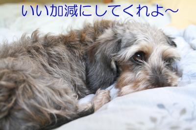 IMG_6987_convert_20100529215314.jpg