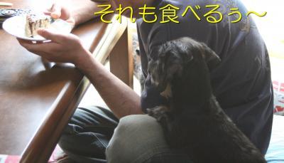 IMG_7156_convert_20100608153720.jpg