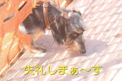 IMG_7693_convert_20101010105747.jpg