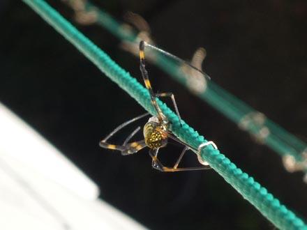 凛vs蜘蛛⑦