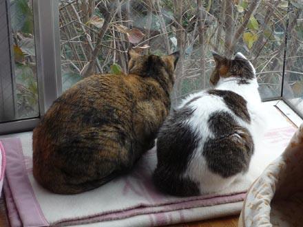 出窓で外を眺める凛・蘭