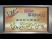 にゃんこい! 第09話「ガールズ・イン・ザ・ウォーター」.flv_000940022