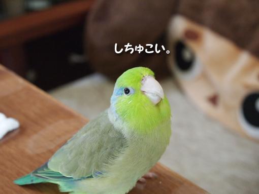 P9013574.jpg