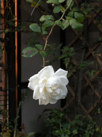 新雪 2009/11/21