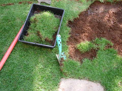 花壇拡張作業(西洋芝剥がし2)
