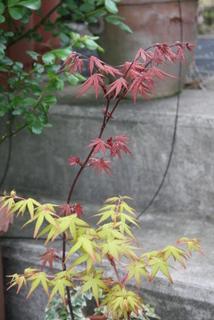 桂と笠置山・春(2009/4/14)