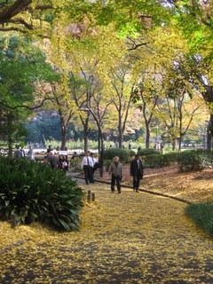 日比谷公園の紅葉6