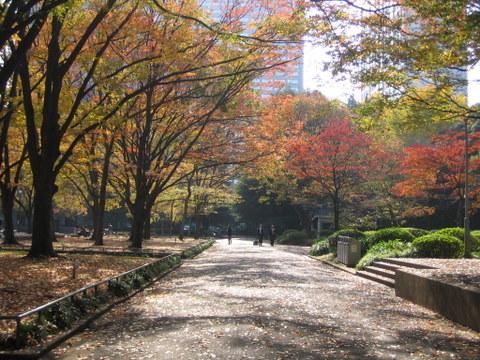 日比谷公園の紅葉8