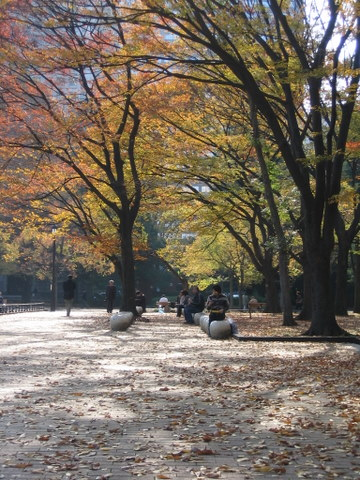 日比谷公園の紅葉9