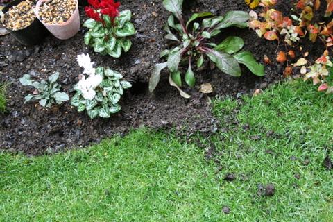 ネズミの穴掘り2