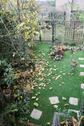 コブシの落ち葉1