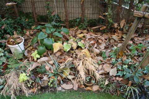 落ち葉のシェードガーデン1