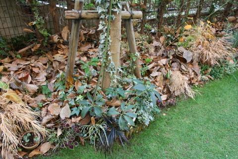 落ち葉のシェードガーデン2