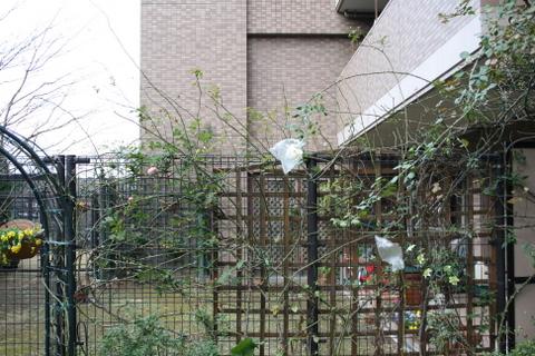 フェンスのカクテルとウィリアム・モリス