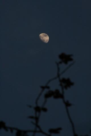 月とニュードーン2