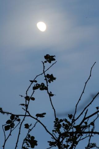 月とニュードーン1